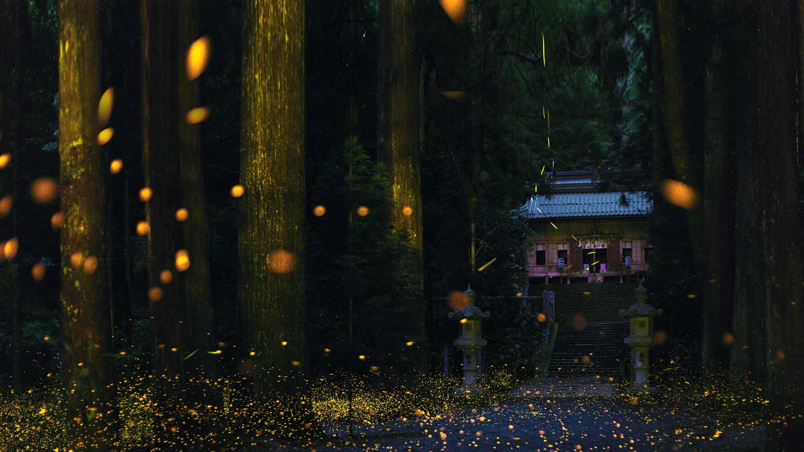 Feel Summers Magic At These 11 Famous Places To See Fireflies In Japan
