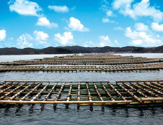 三重県 牡蠣の養殖筏