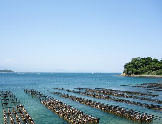 江田島のかき筏