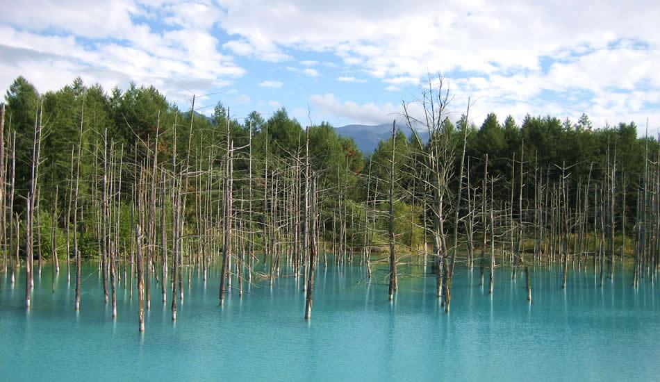 青の北海道を体感「白金青い池」
