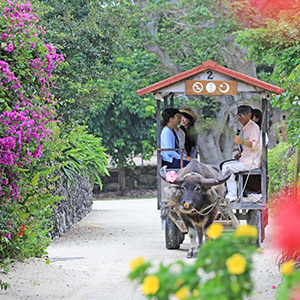 伝統文化、透きとおる海。ふたつの異なる沖縄を感じる、星のや 周遊の旅へ。
