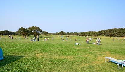 ひたち海浜公園のイメージ1