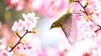 本州で一番早い春!