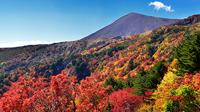 地上が珊瑚礁になる日本の秋