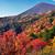 写真 地上が珊瑚礁になる日本の秋!常宿に出会う旅