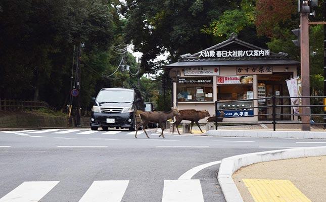 鹿と出合って、路地裏迷子。