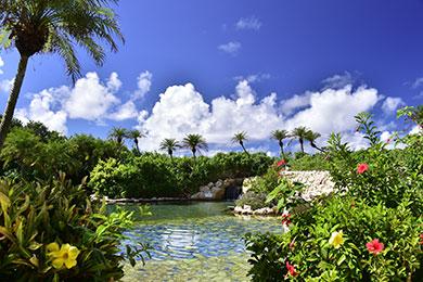 530㎡もある亜熱帯の緑や花々が美しいジャングルプール。
