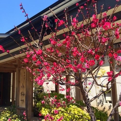 【栃木県】塩原温泉で日帰りで貸切風呂のある温泉宿を教えてください。
