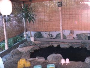 岬ペンション ガジュマルの客室の写真