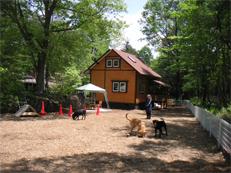 犬と泊まれる貸別荘 ミリーズラブ 画像