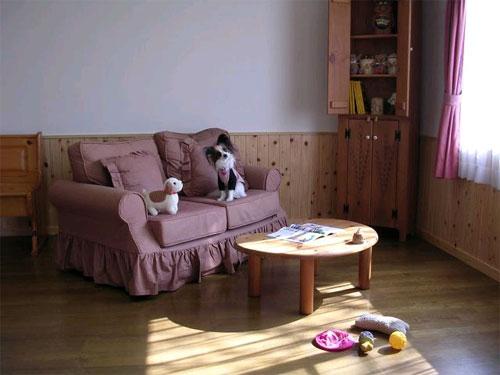 伊東温泉 愛犬と泊まれる宿アップルシード 画像