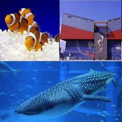 世界最大級の水族館へ行こう!海遊館入場券付き【選べる朝食付】