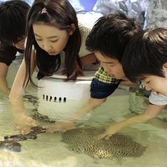 世界最大級の水族館へ行こう!海遊館入場券付き