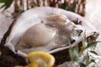 【夏】≪夏の一押し≫海の幸の盛合わせと岩牡蠣&和牛海藻蒸し