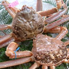 【冬】★タグ付き活松葉蟹を一人2杯★お品書きは当日料理長とご相談◆【活松葉蟹わがままプラン】
