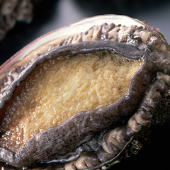 【冬】新鮮な地魚、タグ付きかにも味わえる【地蟹付き懐石プラン】丹後では珍しいにごり湯温泉