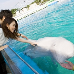 【サマーキャンペーン】八景島シーパラダイス(水族館&アトラクション)+¥500分クーポン+ 朝食付