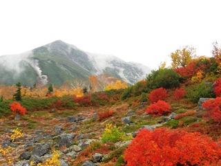 秋の信州 乗鞍高原 別荘気分のコテージとフランス料理を愉しむ旅へ 定番プラン