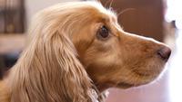 【月替わり★ワンちゃん宿泊半額】毎月異なる犬種がお得なプラン♪<素泊まり>