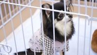 【月替わり★ワンちゃん宿泊半額】毎月異なる犬種がお得なプラン♪<朝食付き>