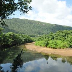 【一番人気/スタンダードプラン】ジャングルを眺めながら、西表産の食材に舌鼓♪1泊2食付きプラン