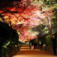 高野山の紅葉◆世界遺産と色づくもみじを観賞!1泊2食<二の膳付き>