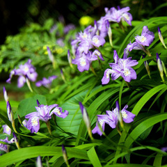 【期間限定★梅雨割】静かな初夏の高野山をお得に愉しむ♪6/15は町を挙げた「青葉祭」を盛大に開催