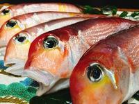 【特選刺身盛り合わせ付き地魚会席!!】新鮮、旨い、丹後の魚!!部屋食