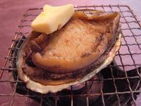 ◆イルカウォッチング乗船券・2食付◆ 三大味覚【あわび踊り焼・平目姿造り・熊本産黒毛和牛ステーキ】