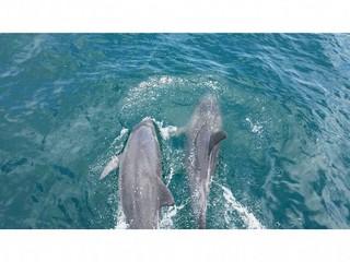 ◆イルカウォッチング乗船券・朝食付◆シングルルーム セミダブルベッドに2人で泊まる仲良しプラン♪