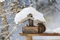 【シングル】雪見風呂で温泉満喫♪〜気の向くまま温泉一人旅プラン〜