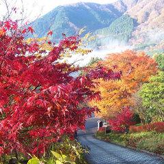 ◇◆箱根仙石原の紅葉・ススキを観賞◆◇秋満喫プラン<ライトコースC>