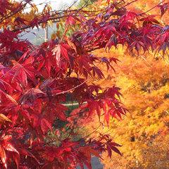 ◇◆箱根仙石原の紅葉・すすきを観賞◆◇秋満喫プラン<フルコースB>
