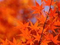 【紅葉シーズン到来♪】もみじ狩り 1泊2食バイキングプラン90分飲み放題付きプラン♪