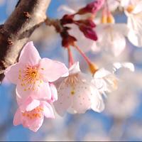 【春限定★知多のお遍路さん】知多四国霊場巡りで、嬉しい特典付き♪ご朱印集めに
