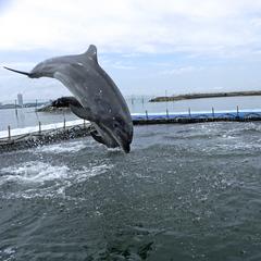 ≪イルカハウス入場券付≫イルカに会える島 「イルカウォッチング」体験♪海鮮グルメ