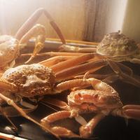 ★活き蟹1杯-基本編-★鮮度抜群!とろ〜り食感『蟹刺し』&濃厚な旨み『甲羅味噌焼き』を 旬魚食通