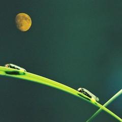 月夜野ホタル紀行〜露草プラン〜幻想的な夜へのお誘い♪当館はホタルの見学地から最も近い宿!わずか10分