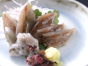 【春の美味】富山湾のホタルイカと白えび