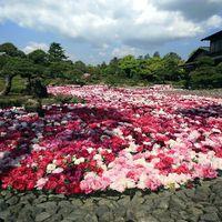 【由志園・入園引換券付き】花咲く回遊式日本庭園で四季を感じるひととき…「温泉×花」の和み旅