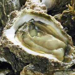 【*夏季限定*】≪生岩牡蠣≫付!ぷりっぷりの海のミルクを堪能♪【現金特価】