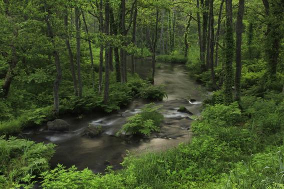 カントリーイン森のゴリラ