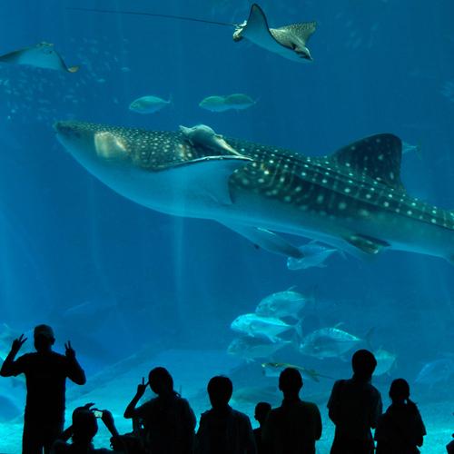 【楽パック★イチオシ】≪美ら海水族館チケット付≫本物のジンベエザメを見に行こう!(夕朝食付き)