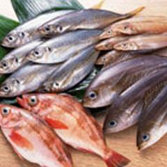 釣り好き集まれ!三崎の海を堪能♪釣り三昧プラン【1泊夕食付】
