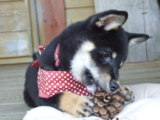 【リーズナブルプラン】自分でバーベキュー☆ペットと一緒にお洒落なログコテージ 食事なし