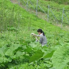 ≪女将一押し★特別プラン≫ 『 春の山野草(山菜)♪とおまかせ会席 』