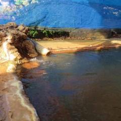 【美味旬旅】ちょっぴりグレードアップ♪開湯約800年の温泉を満喫
