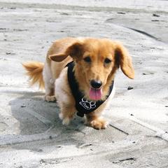 ペットと温泉旅行!畳のお部屋に愛犬と一緒に泊まる♪歴史ある出湯温泉へ行こう