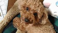 ペットと温泉旅行!畳のお部屋に愛犬と一緒に泊まる♪歴史ある出湯温泉へ行こう♪