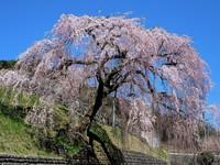 【下呂市内最大規模温泉】 美輝の里25周年特別記念! ≪春の特別会席≫プラン♪